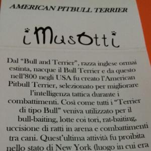 Ciondolo Cane American Pittbull Terrier in argento 925 I MUSOTTI vendita on line | BRUNI GIOIELLERIA