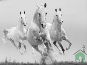Set Copripiumino + lenzuolo sotto e federa Gabel Singolo Cavalli