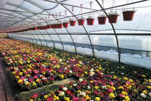Riscaldamenti  per applicazioni florovivaistiche , allevamenti , agricoltura , serre ,tunne agricoli . prezzo €/mq