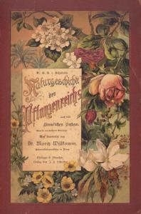 Stampa antica botanica 1