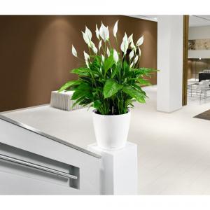 LECHUZA Vaso classico con set di irrigazione bianco cm. 43