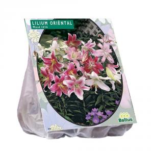 Baltus Lilium Oriental Mix 5 Spare Bulbs From Flower Seeds In Autumn
