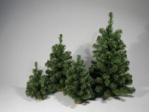 TABOR Pinetto Ecology Cm 50 Verde Albero Natale Addobbi Natalizi Regalo 117