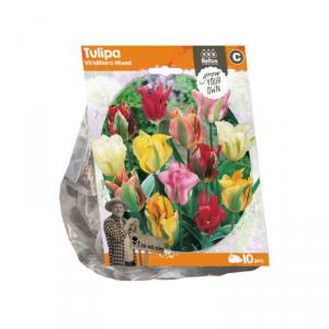Baltus Tulipa Viridiflora Mixed Flower Bulbs In Format Bag