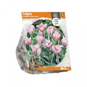 Baltus Tulipa Viridiflora China Town Flower Bulbs In Format Bag