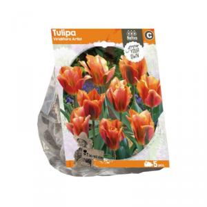 Baltus Tulipa Viridiflora Artist Flower Bulbs In Format Bag