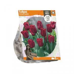 Baltus Tulipa Triumph Seadov Flower Bulbs In Format Bag