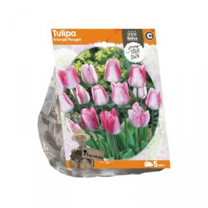 Baltus Tulipa Triumph Playgirl Flower Bulbs In Format Bag