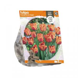 Baltus Tulipa Triumph Brown Sugar Flower Bulbs In Format Bag