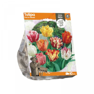 Baltus Tulipa Parrot Mixed Flower Bulbs In Format Bag