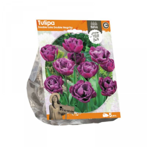 Baltus Tulipa Double Late Double Neg. Flower Bulbs In Format Bag