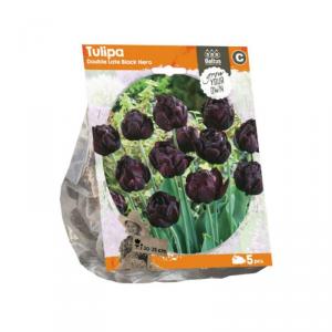 Baltus Tulipa Double Late Black Hero Flower Bulbs In Format Bag