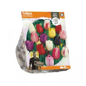 Baltus Tulipa Darwin Mixed Flower Bulbs In Format Bag