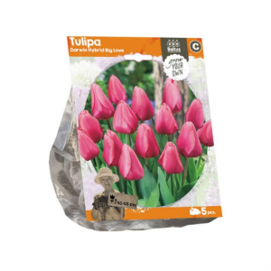 Baltus Tulipa Darwin Hybrid Great Love Flower Bulbs In Format Bag