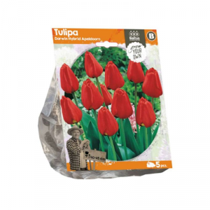 Baltus Tulipa Darwin Hybrid Apeld. Flower Bulbs In Format Bag