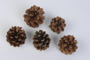 KAEMINGK Pine Cone Color Natural Size 15X15 Garlands And Fringes Christmas 650