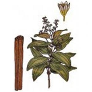 Cannella Ceylon Cannoli
