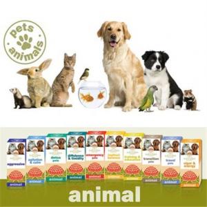 Training & Education Pets