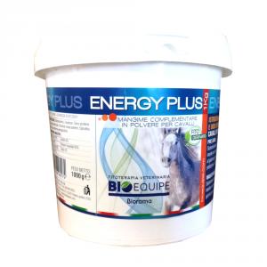 ENERGY PLUS - CAVALLI