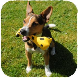 George la Giraffa - Peluche in stoffa imbottita per cani