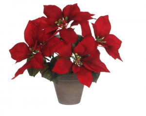 EDELMAN Stella Di Natale Rossa In Vaso Natale Decorazioni E Oggettistica