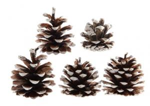 KAEMINGK Pigne Decorate Bianco Natale Decorazioni E Oggettistica