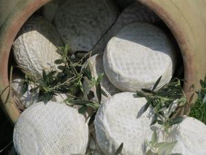 Giara in foglie di Ulivo - 400gr