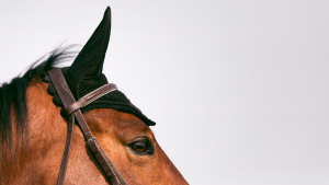 Drake - Sottosella e cuffia equitazione