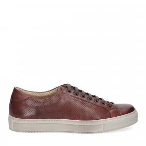 Griffi's sneaker 1102 pelle forata marrone-1