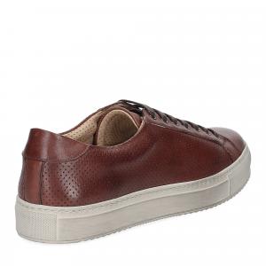 Griffi's sneaker 1102 pelle forata marrone-4