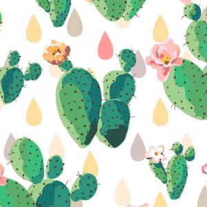 Cactus combo