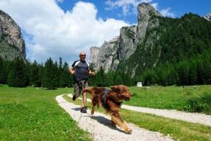 Pettorina dog Running & trekking Neewa