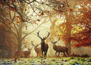 HEYE - MAGIC FORESTS