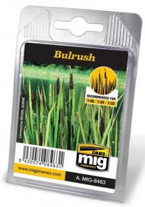 BULRUSH - Giunchi