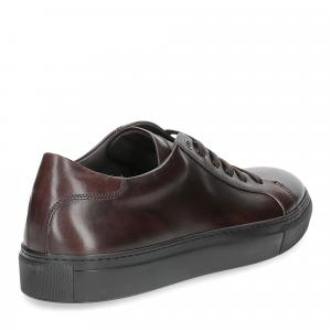 Corvari sneaker 1215 pelle marrone testa di moro-5