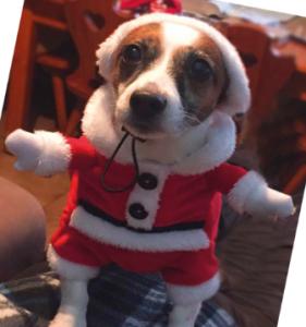 Vestitino di babbo Natale per cane Croci