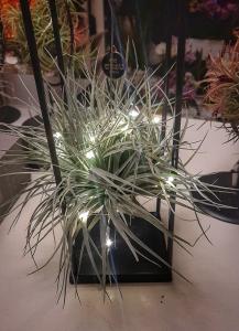 Tillandsia pianta con basamento metallico e luci