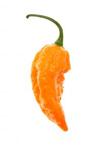 BBG Orange x Pimenta da Neyde disidratato