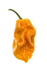 Habanero Mustard disidratato