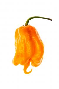 Crema di 7 Pot Primo Orange