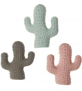 Imac - Cactus in Lattice