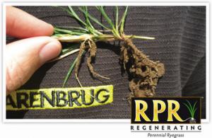 Seme per prato BARENBRUG RPR auto-rigenerante