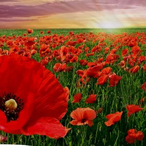 Komplette Bettwäsche BLOOM digitale Tagesdecke für Double Flower