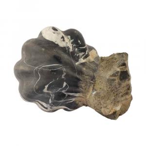 Conchiglia portaoggetti in marmo Nero Antico scolpita a mano
