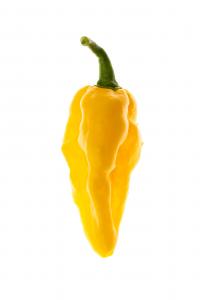 Naga Yellow e Timo citrodoro