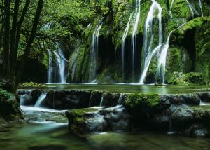 Heye-magic forests-