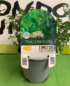 TIMO LIMONATO vaso 14cm ⌀