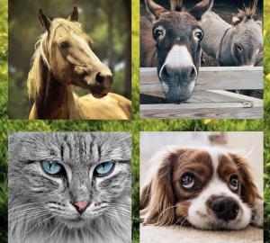 Alimenti per cani e gatti e consulenze