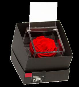 Flowercube rose stabilizzate colori rosso