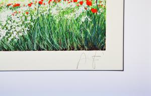 Azzinari Franco Serigrafia Formato cm 25x35